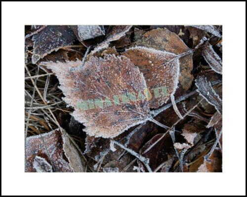 Frostiga höstlöv