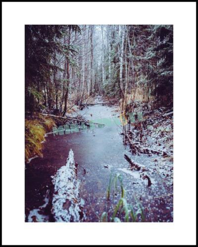 Skogsbäck i frost